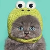 Котик в жёлтой вязаной шапочке с глазами
