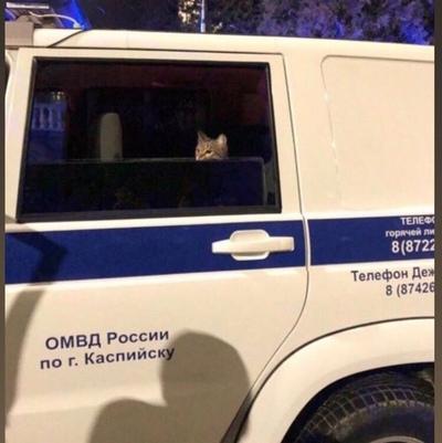 Кот Чеширский, Тверь
