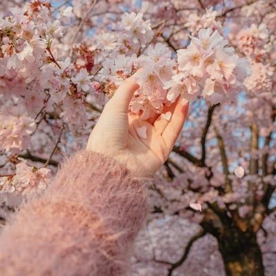 咲く さくら, Санкт-Петербург